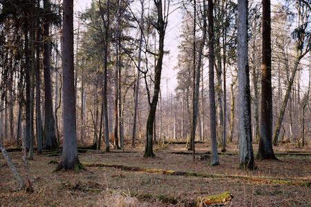 Копия-Nir-Evron_one-forest_1